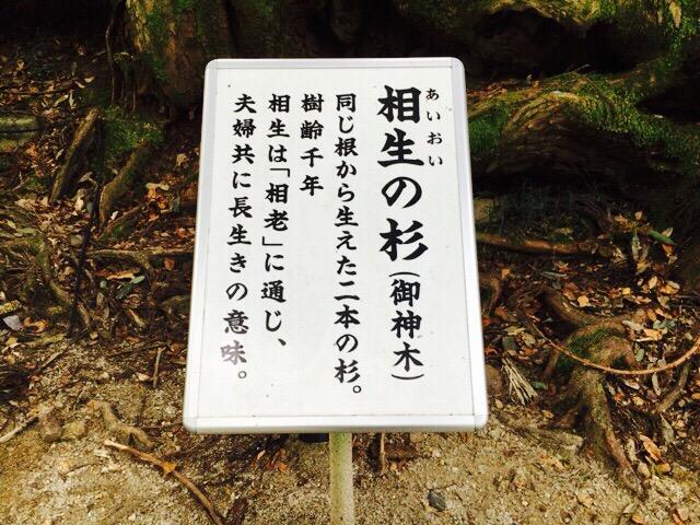 貴船神社相生の杉